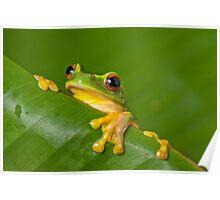 Peek-a-frog Poster