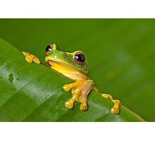 Peek-a-frog Photographic Print