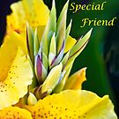 To My Special Friend by Heather Friedman