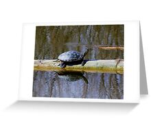 Painted turtle in the sun Greeting Card