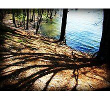 April Shadows Photographic Print