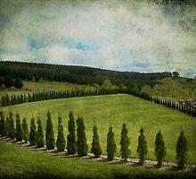 Mayfield III by Lorraine Creagh