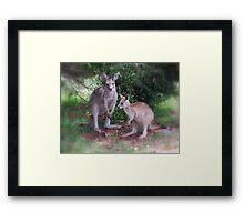 Kangaroos at Buchan Framed Print