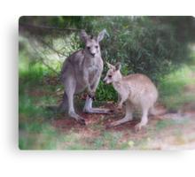 Kangaroos at Buchan Metal Print