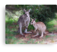 Kangaroos at Buchan Canvas Print