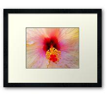 Hibiscus - 3 Framed Print