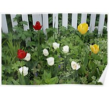 Picket Fence with Tulips Poster