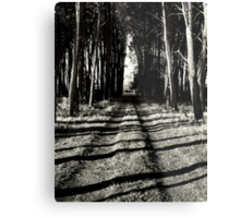 The road less travelled.... Metal Print