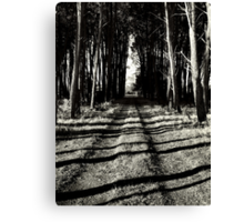 The road less travelled.... Canvas Print