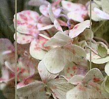 ~ Hydrangea in Triptych ~ by Lynda Heins