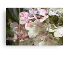 ~ Hydrangea in Triptych ~ Canvas Print
