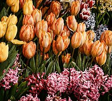 Painted Tulips by Joanne Henig Photography