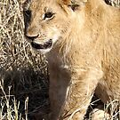 Lion Cub Sitting, Maasai Mara, Kenya  by Carole-Anne