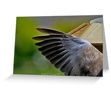 Ring Necked Dove (From My Window) Greeting Card