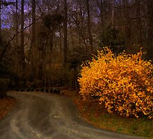 Country Road by Stephanie Reynolds
