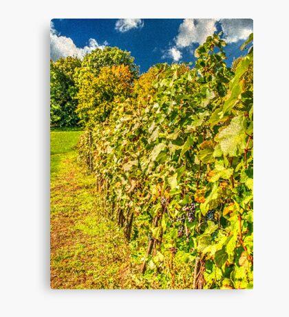 Vineyard-autumn painting, oil painting, nature Canvas Print