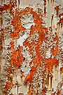 Fire Dragon by Barbara Ingersoll