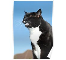 Sneezing black and white cat Poster