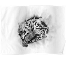 Baby Tiger sleeping Poster