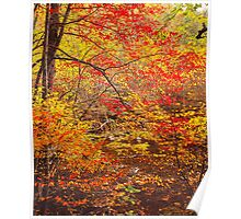 COLOR OF AUTUMN Poster