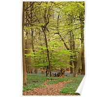 forest in spring Poster