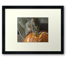 Pumpkin on the Menu Framed Print