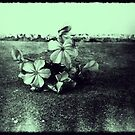 iPhone flowers by fourthangel