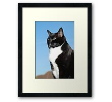 Mature black and white cat Framed Print