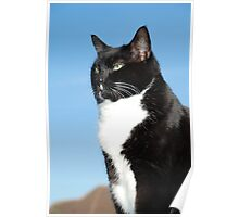 Mature black and white cat Poster