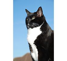 Mature black and white cat Photographic Print