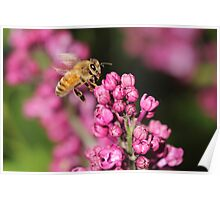 Busy Bees on the Lilacs Poster