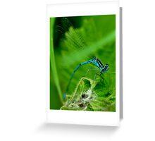 Common blue Damselfly Greeting Card