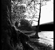 Rowardennan, Scotland by Audrey Krüger