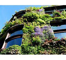 Vertical garden - Blooming now  Photographic Print