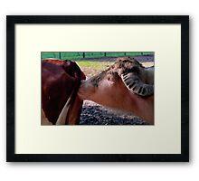 Oxen Framed Print