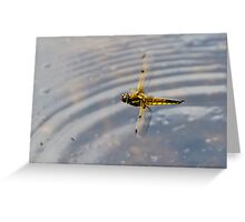 Dragonfly in flight over pond Greeting Card