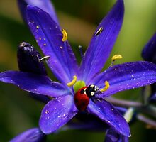 Ladybug on Purple by AnnDixon