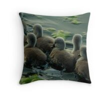Swan cygnets following mother Throw Pillow