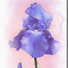 Blue Iris Painting by Sarahbob