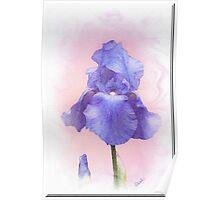 Blue Iris Painting Poster