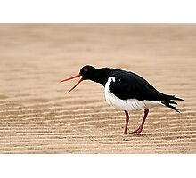 """Go Away"" - Pied Oystercatcher, Tathra Beach Photographic Print"