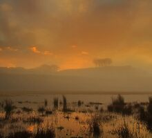Distant trees in the fog.  by Fred Taylor
