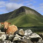 Moo-na Lisa - Cow & Ben Bulben by Hauke Steinberg