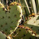 Love Cactus by Sanne Hoekstra