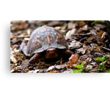 Box Turtle, Edith J. Carrier Arboretum, Harrisonburg, Virginia Canvas Print