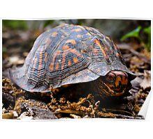 Box Turtle, Edith J. Carrier Arboretum, Harrisonburg, Virginia Poster