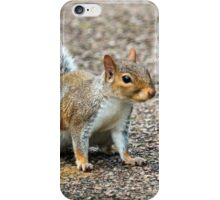 Squirrel On Footpath iPhone Case/Skin