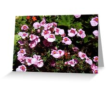 pink blossoms Greeting Card