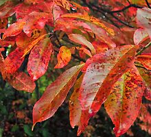 Red Autumn Leaves by KellyHeaton