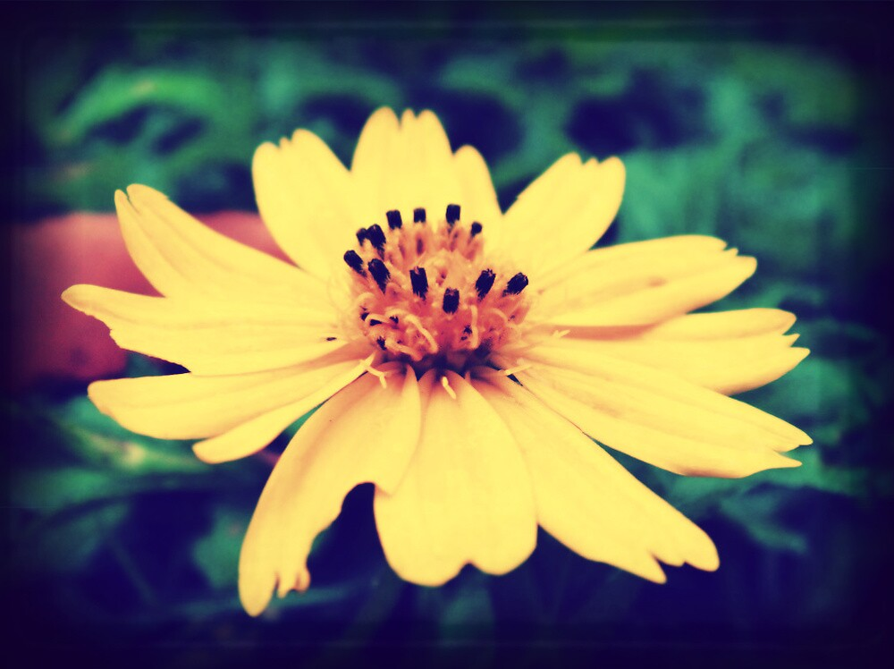 Retro flower by islefox
